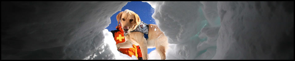 Vail Valley Animal ER 24 Hour Emergency Care