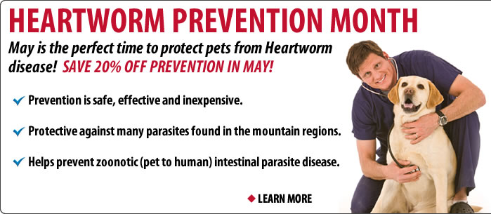 May is Heartworm Prevention Month at Vail Valley Animal Hospital - Save 20% Off!