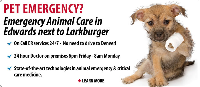 Vail 24 emergency pet services and vets on call