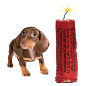 July Fourth Pet Safety Tips & News