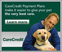 Pet Care Financing Options From CareCredit at Eagle-Vail Animal Hospital