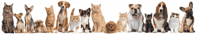 top 10 reasons to spay or neuter your pet!